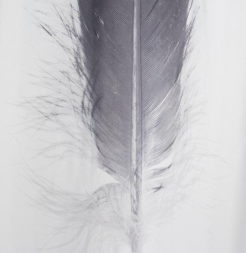 Duschvorhang TOTRA 150x200 schwarz/weiß