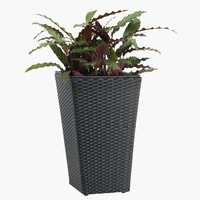 Flower pot BLOMMOR W31xL31xH50 black